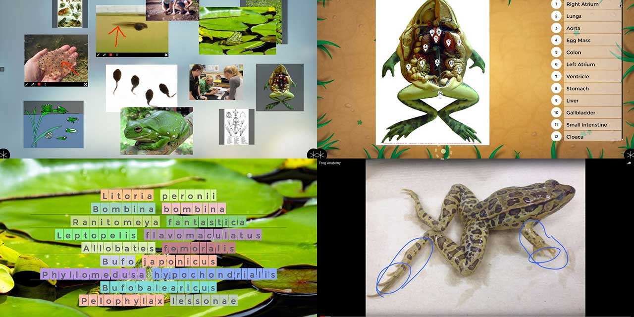 Frog_in_Zones.jpg