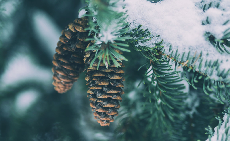 about_snowflake.jpg